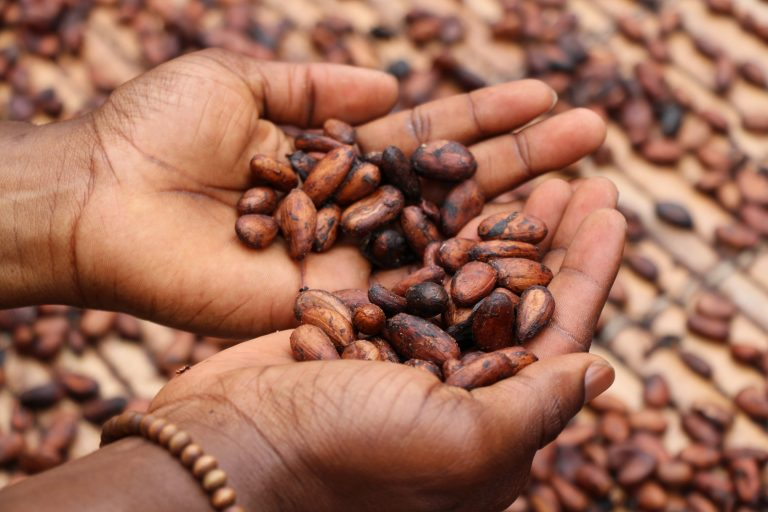 Cacao: Getting Your Chocolate Fix the Healthy Way